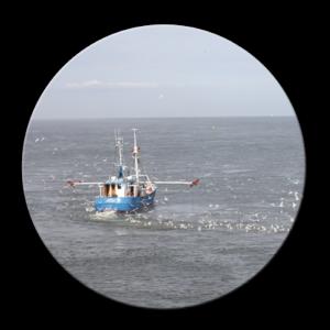 Nordseekrabben