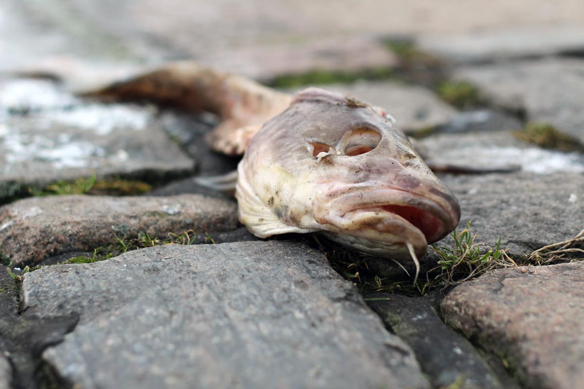 Hamburger Hafen - Fischmarkt