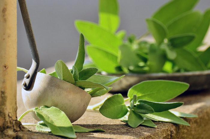 Kräuterkunde - Salbei
