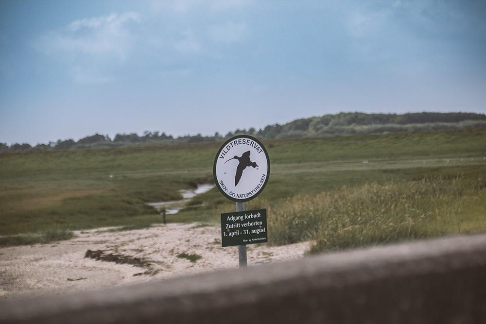 Tagesausflug-nach-Dänemark-Naturschutzgebiet