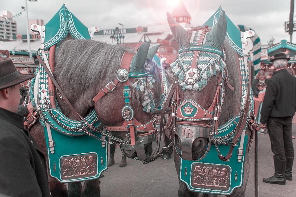 Oktoberfest 2017 Pferde