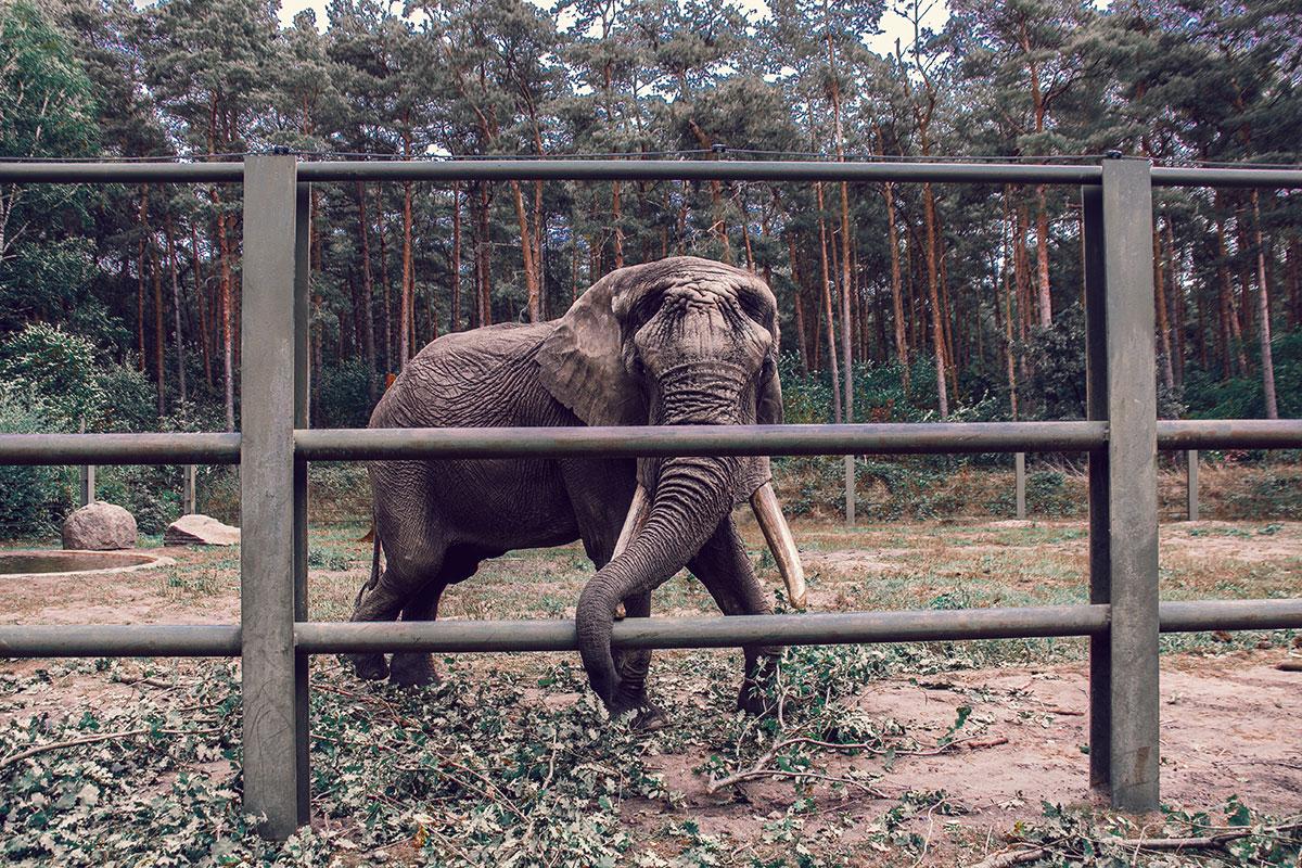 Serengeti Park Elefant