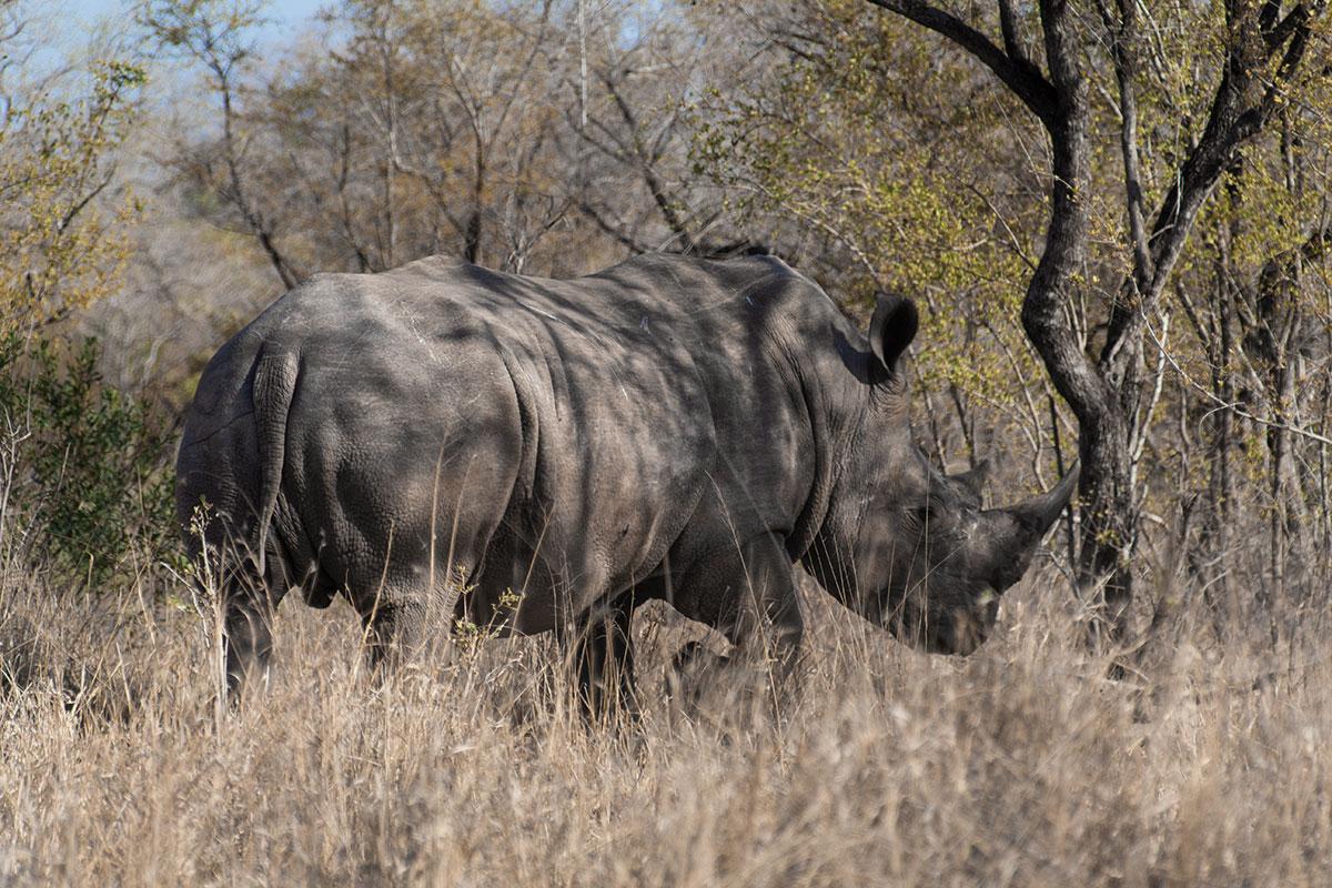 Safari Nashorn Rhinozeros