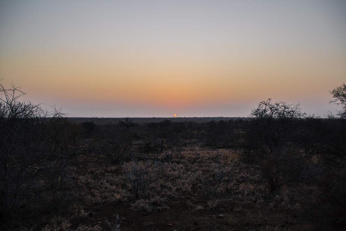 Safari Sonnenaufgang