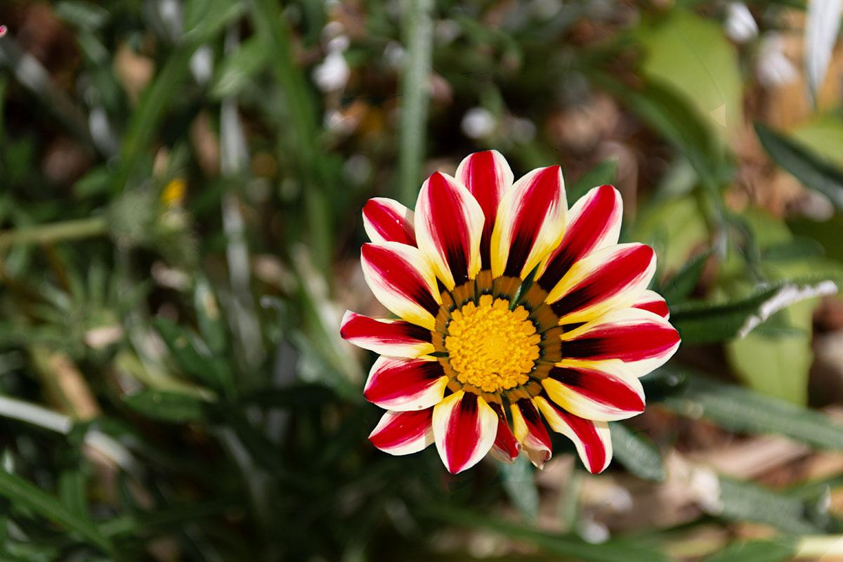 Stellenbosch Botanischer Garten