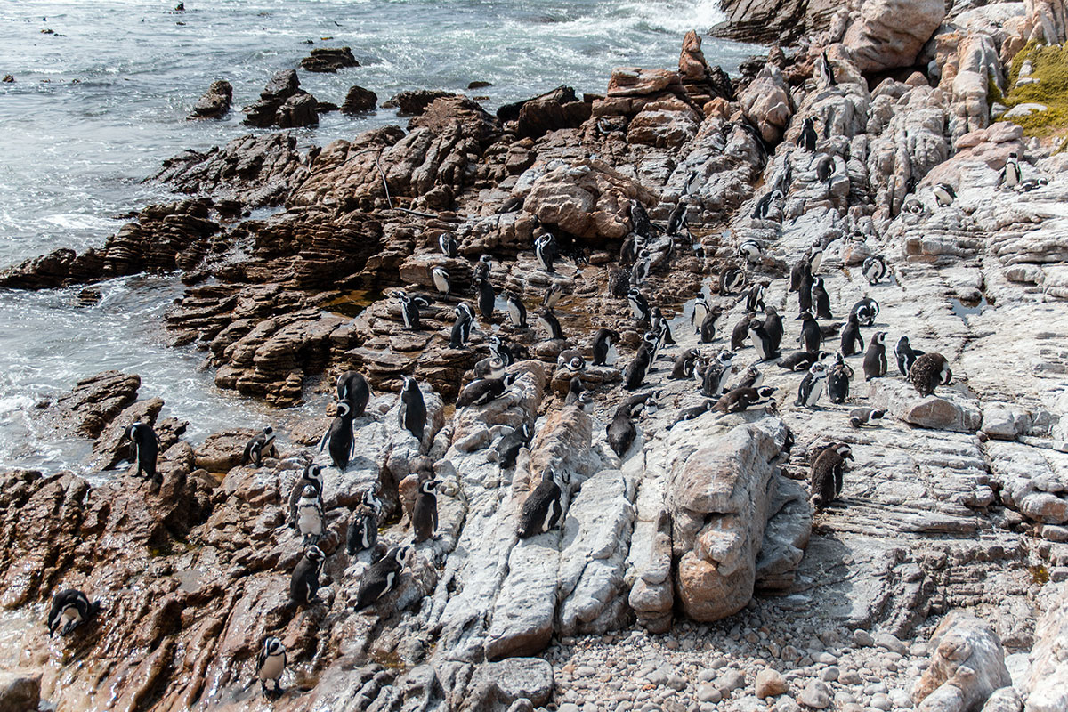 Hermanus Bettys Bay Pinguin Crew