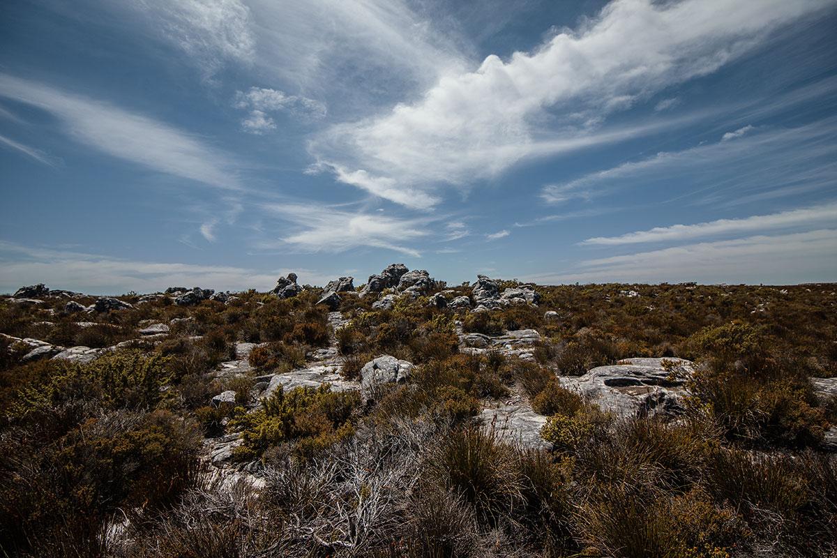 Tafelberg Flora und Fauna