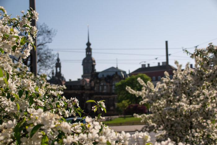 Dresden Zwinger im Frühling