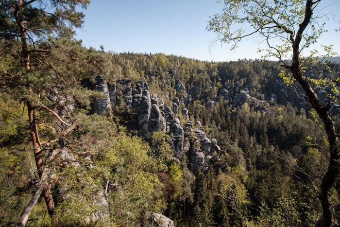 Blick in den Wald des Elbsandsteingebirges