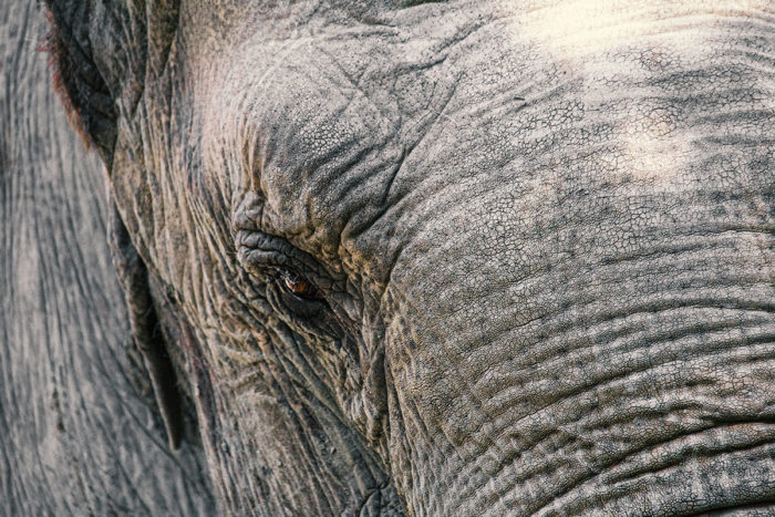 Elefant Auge um Auge