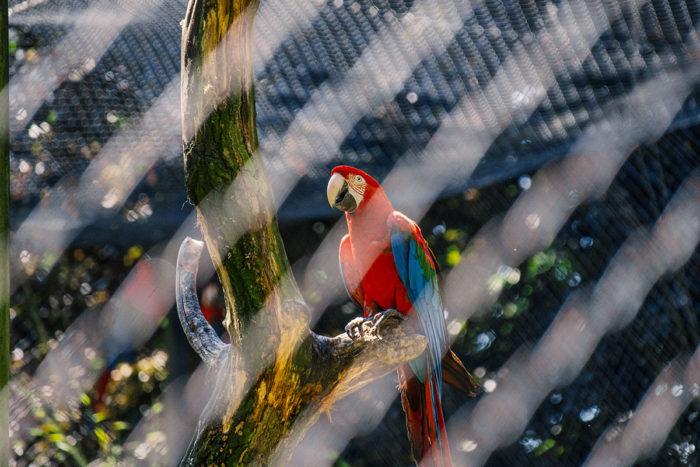 Hagenbecks Tierpark Papagei
