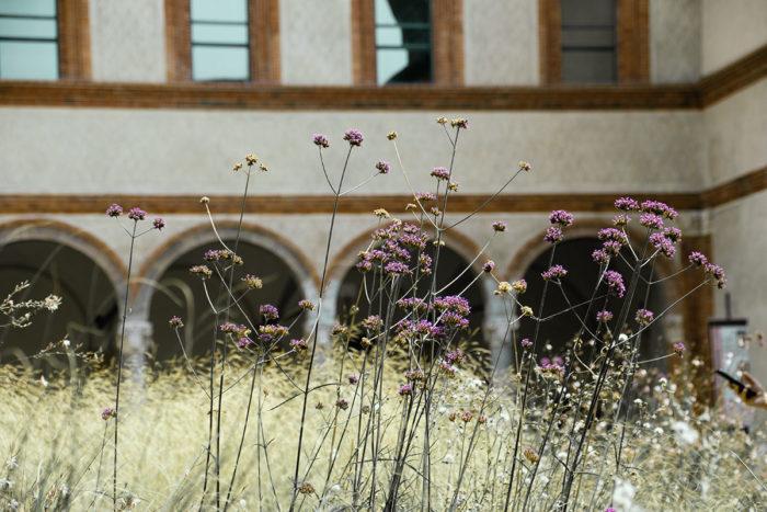 Natur im Castello Sforzesco